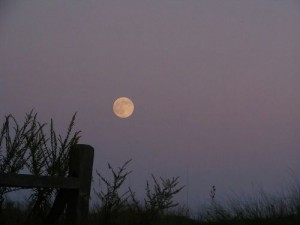 Harvest Moon on the Rise